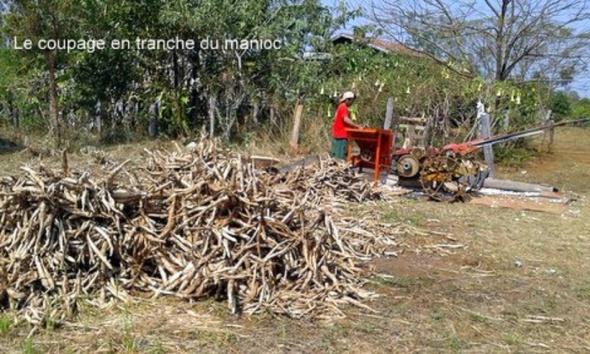 Coupage manioc_slide